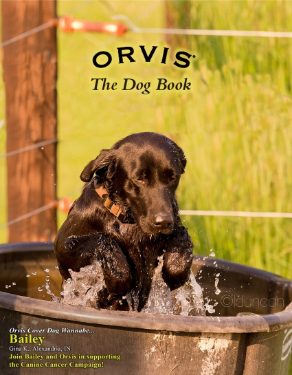 Notice that the tagline says Orvis Cover Dog Wannabe. For Bailey to earn a real cover dog title, she'll have to win the popular vote against some very stiff competition.