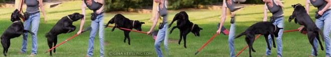 Crazy jumping dog filmstrip