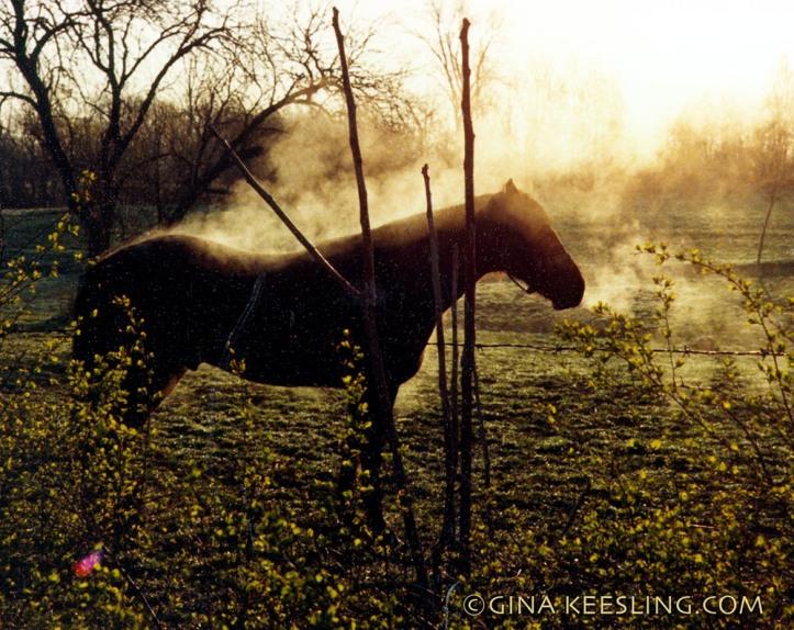 ©Rocky steaming.jpg