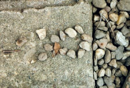 ©Paws Stone Fish